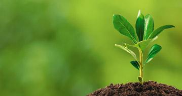 tree growing in soil